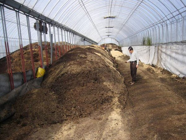 How to compost with cow dung?