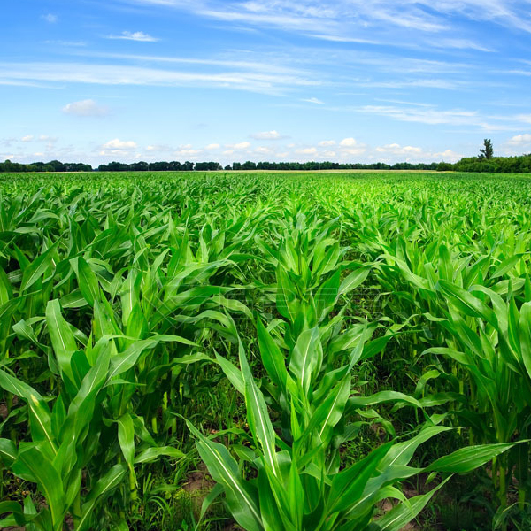 What are the benefits of organic fertilizers for crops?